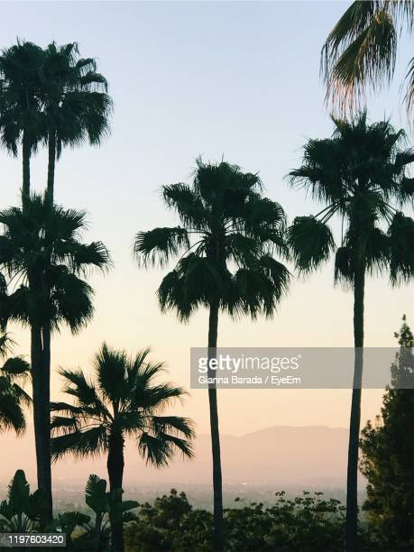 silhouette palm trees against sky during sunset - beverly hills stock pictures, royalty-free photos & images