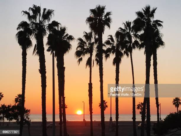 silhouette palm trees against sky during sunset - rachel wolfe stock pictures, royalty-free photos & images