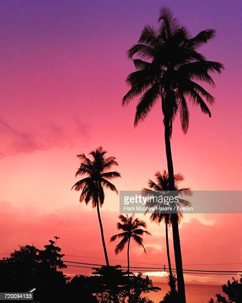 silhouette palm trees at beach against sky during sunset - hakimi stock photos and pictures