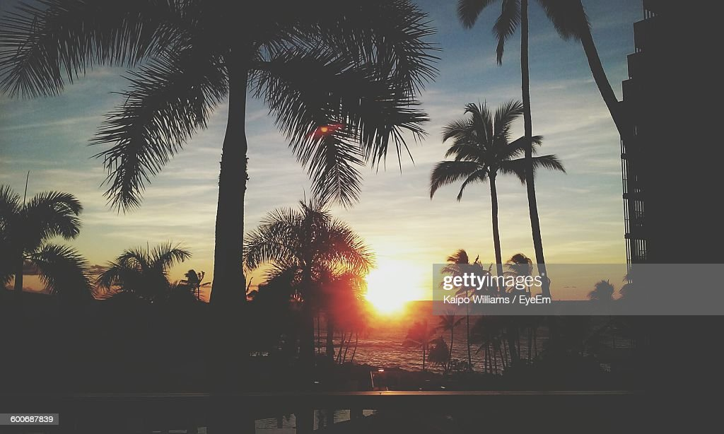 Silhouette Palm Trees At Beach During Sunset : Photo