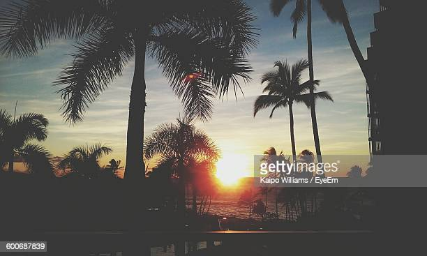 Silhouette Palm Trees At Beach During Sunset