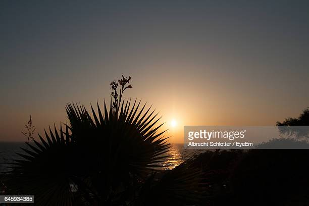 silhouette palm trees at sunset - albrecht schlotter stock photos and pictures