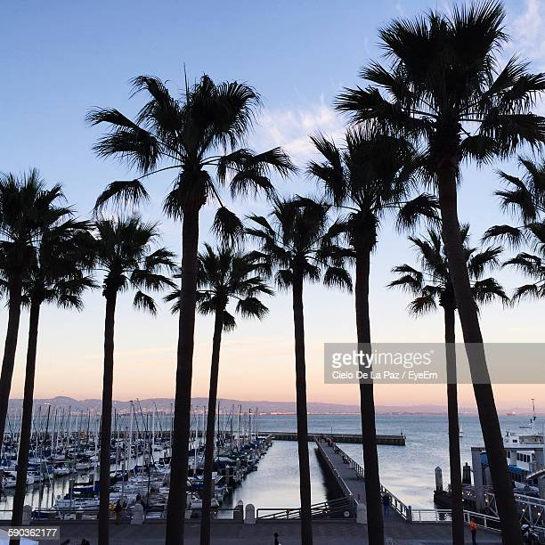 silhouette palm trees by harbor against sky during sunset - palm harbor stock-fotos und bilder