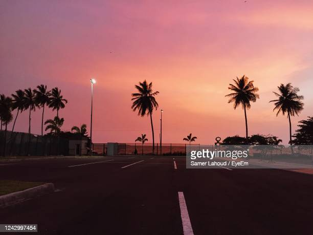 silhouette palm trees by road against sky during sunset - gabon stock pictures, royalty-free photos & images