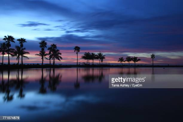 silhouette palm trees by sea against sky at sunset - coral gables stock pictures, royalty-free photos & images