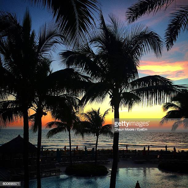 silhouette palm trees by sea against sky during sunset - siesta key stock photos and pictures