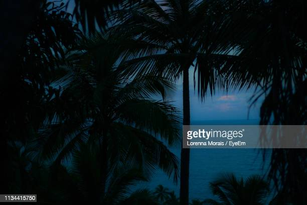 silhouette palm trees by sea against sky - lorenna morais - fotografias e filmes do acervo