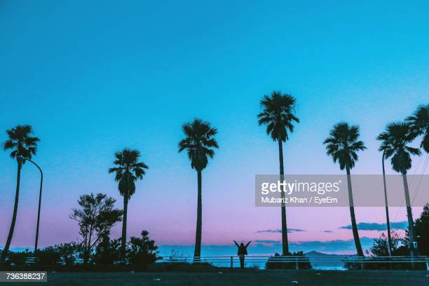 Silhouette Palm Trees On Beach Against Clear Blue Sky