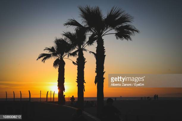 silhouette palm trees on beach against sky during sunset - hermosa beach stock pictures, royalty-free photos & images