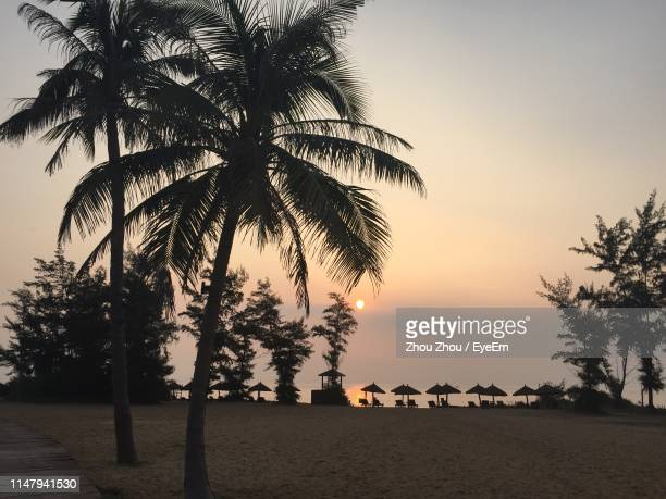 silhouette palm trees on beach against sky during sunset - hainan island stock pictures, royalty-free photos & images