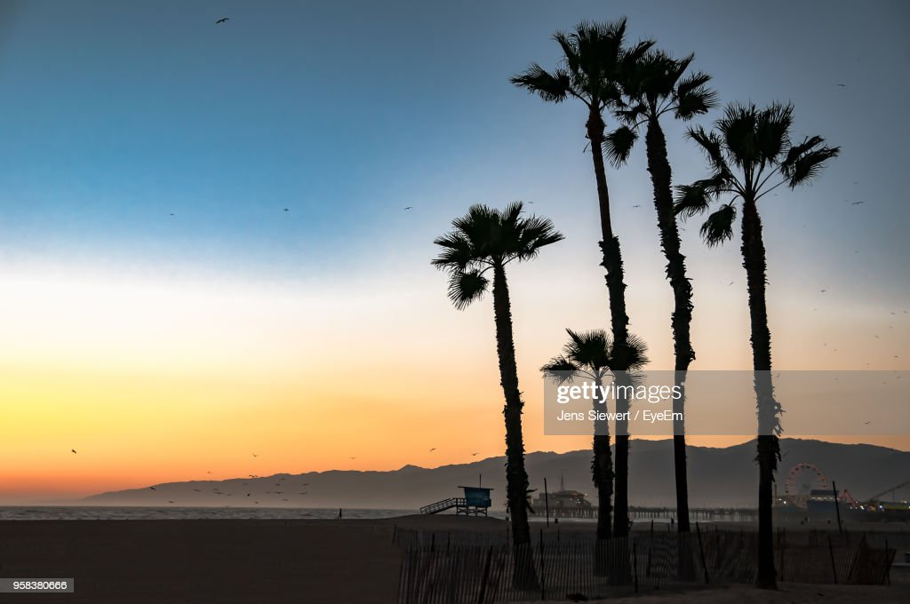Silhouette Palm Trees On Beach Against Sky During Sunset : Stock-Foto