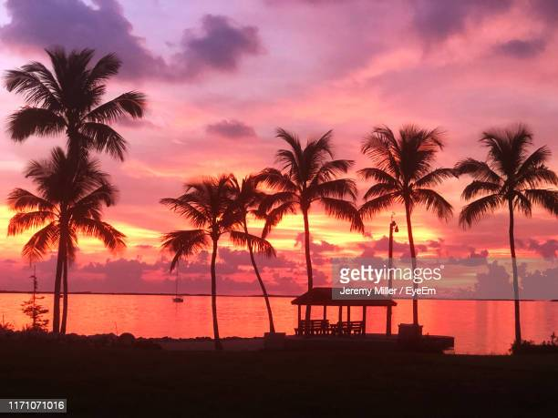 silhouette palm trees on beach during sunset - florida keys photos et images de collection