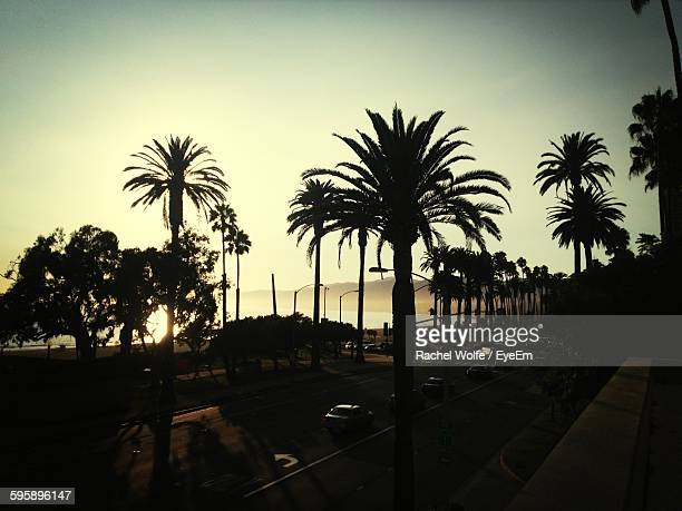 silhouette palm trees on street against clear sky during sunset - rachel wolfe stock photos and pictures