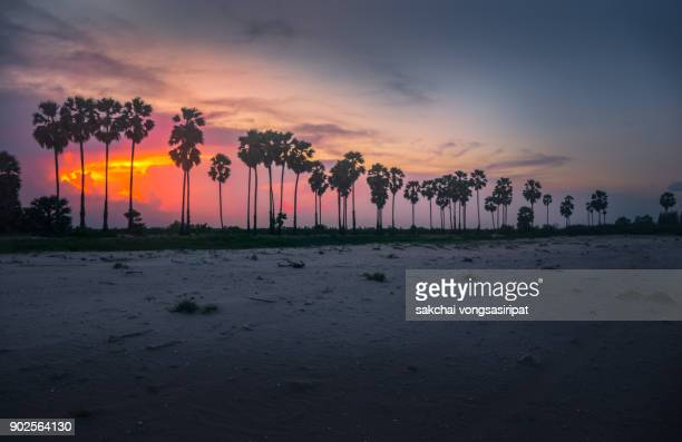 Silhouette Palm Trees on The Beach Against Sky During Sunset
