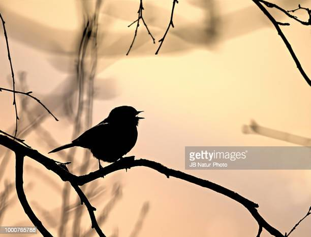 silhouette - natur stock pictures, royalty-free photos & images