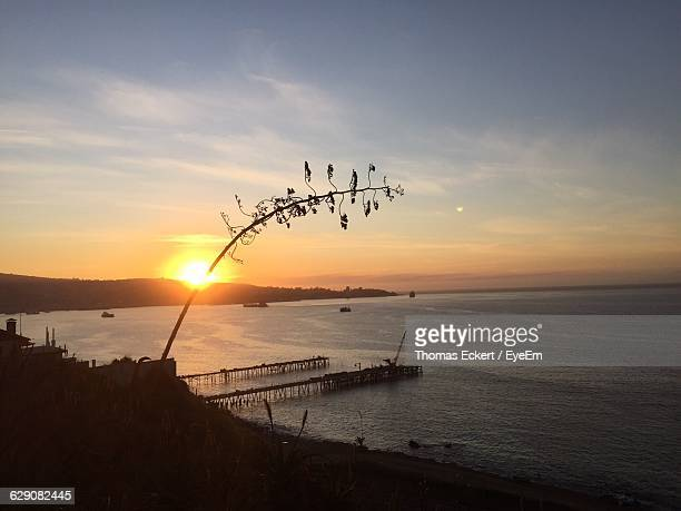 Silhouette Plant Over Sea Against Sky During Sunset