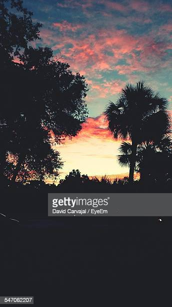 silhouette plants and trees against sky at sunset - carvajal stock photos and pictures