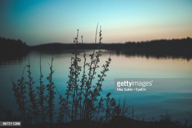 silhouette plants by lake against sky during sunset - ラッペーンランタ ストックフォトと画像