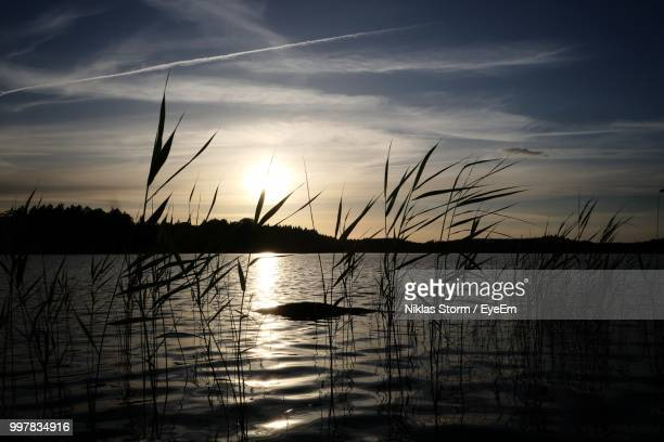 silhouette plants by lake against sky during sunset - niklas storm eyeem stock photos and pictures