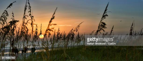 silhouette plants growing on field against sky during sunset - anna maria island stock pictures, royalty-free photos & images