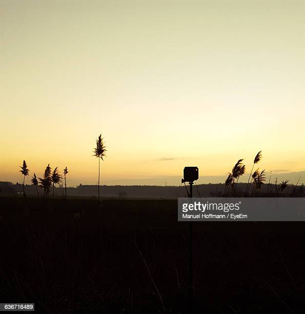 Silhouette Plants On Field Against Clear Sky During Sunset