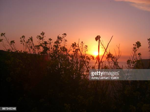 silhouette plants on field against sky during sunset - dawn davenport stock photos and pictures