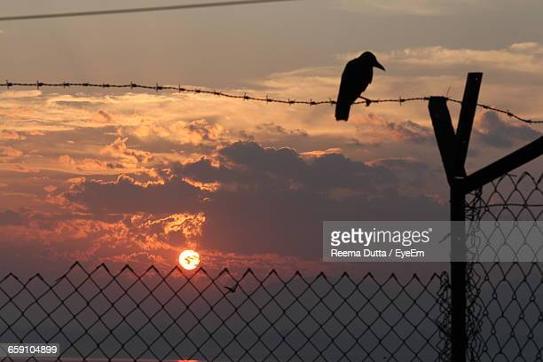 Silhouette Raven Perching On Barb Wire Against Sky During Sunset