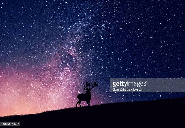 silhouette reindeer on field against glowing constellation in sky - rentier stock-fotos und bilder