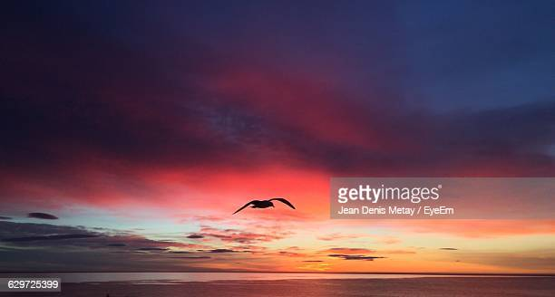 Silhouette Seagull Flying Over Sea During Sunset