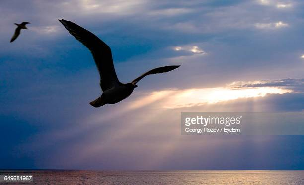 silhouette seagulls flying over sea against cloudy sky during sunset - 2匹 ストックフォトと画像