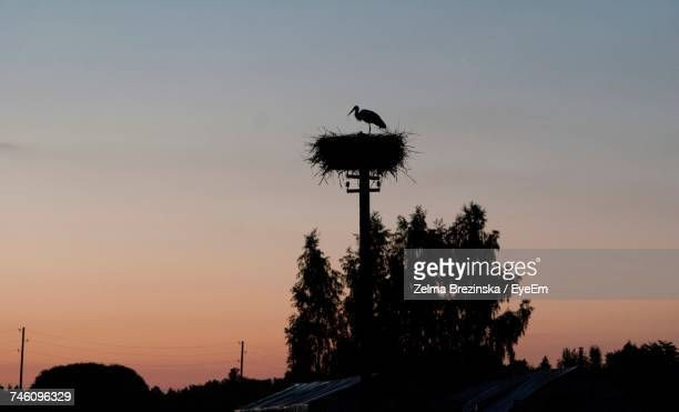 Silhouette Stork In Nest On Pole Against Sky During Sunset