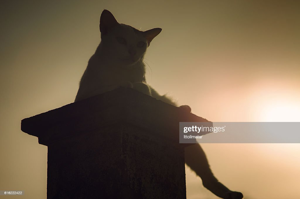 silhouette thai cat sitting on pillar with sunset light : Stockfoto