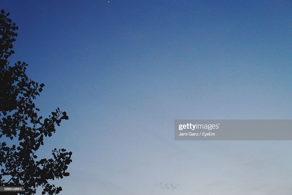 Silhouette Tree Against Clear Blue Sky : Stock Photo