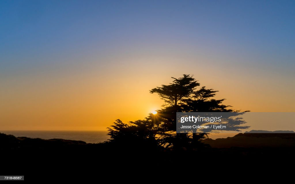 Silhouette Tree Against Clear Sky During Sunset : Stock Photo
