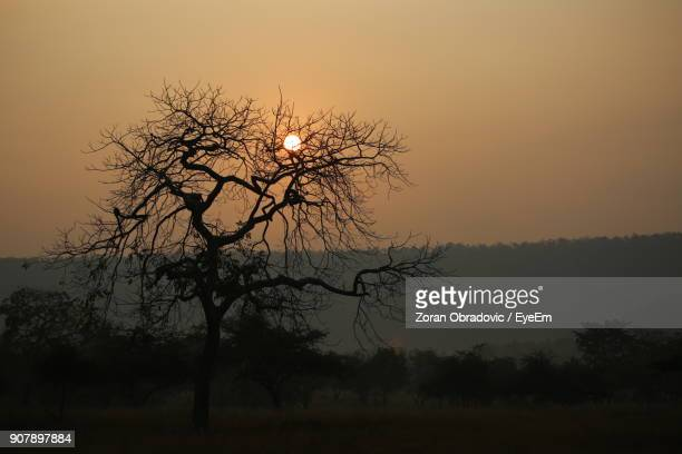 Silhouette Tree Against Clear Sky During Sunset