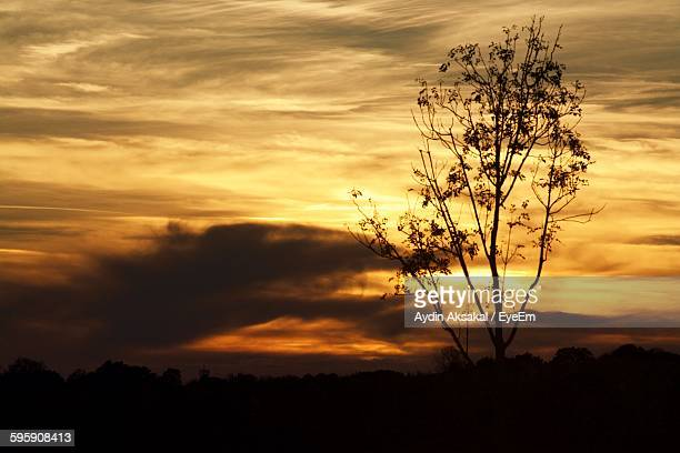 Silhouette Tree Against Cloudy Sky During Sunset