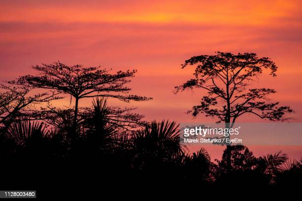 silhouette tree against dramatic sky during sunset - marek stefunko stock photos and pictures