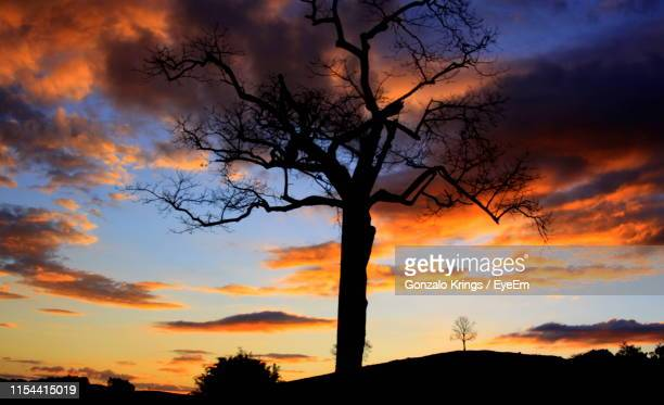 silhouette tree against sky during sunset - krings stock pictures, royalty-free photos & images