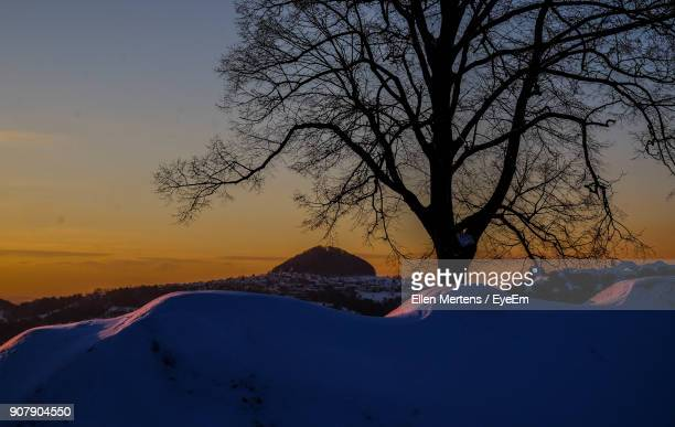silhouette tree against sky during winter - mertens stock pictures, royalty-free photos & images