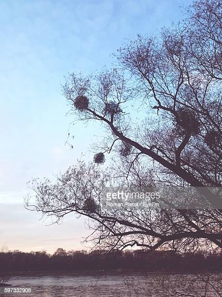 silhouette tree by lake against sky - roman pretot stock-fotos und bilder