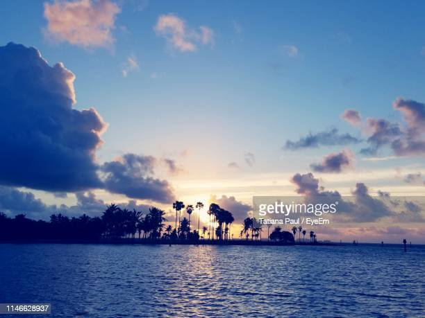 silhouette tree by sea against sky during sunset - coral gables stock pictures, royalty-free photos & images