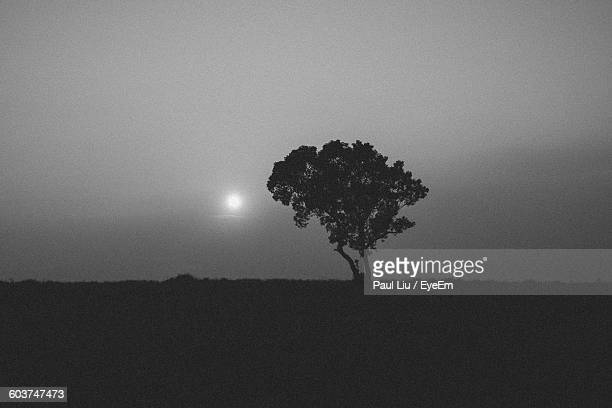 silhouette tree growing on field against sky - liu he stock pictures, royalty-free photos & images