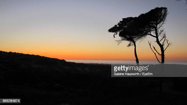 silhouette tree on beach against sky at sunset - sabine hauswirth stock pictures, royalty-free photos & images