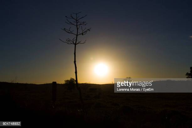 silhouette tree on field against clear sky at sunset - lorenna morais - fotografias e filmes do acervo