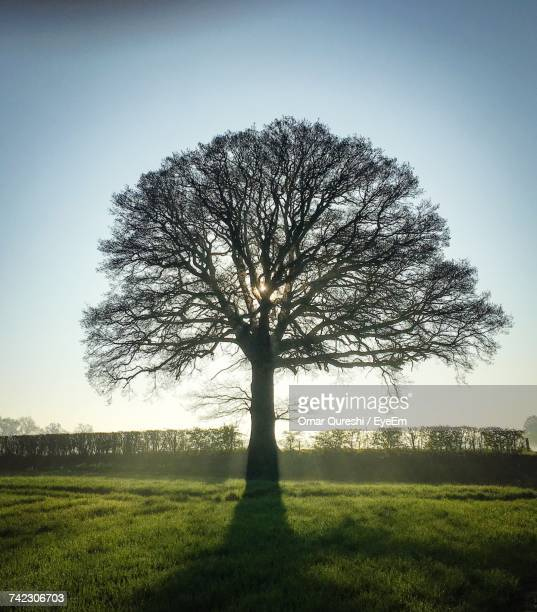 Silhouette Tree On Field Against Clear Sky