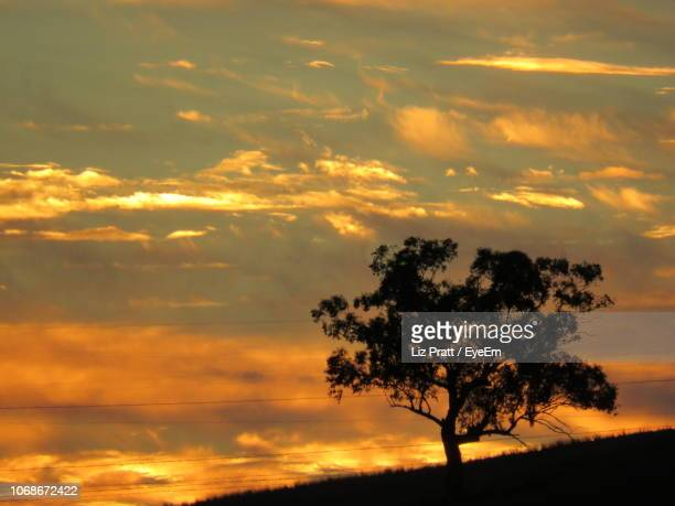 silhouette tree on field against orange sky - tamworth australia stock pictures, royalty-free photos & images