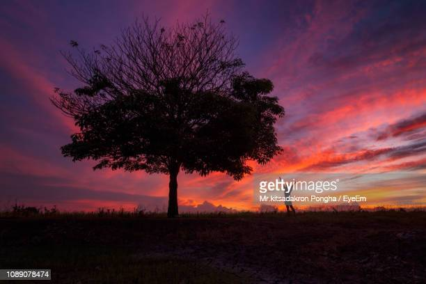 silhouette tree on field against sky during sunset - パトゥムターニー県 ストックフォトと画像