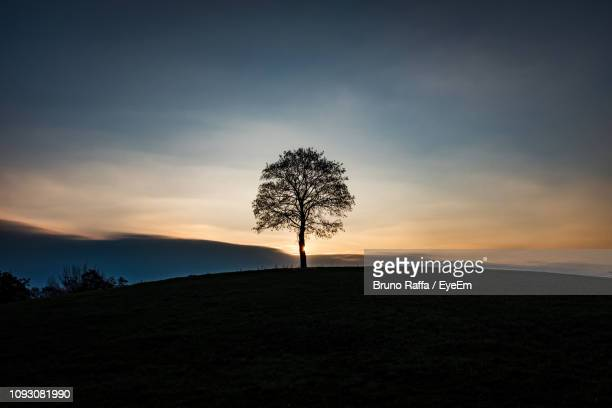 silhouette tree on field against sky during sunset - single tree stock pictures, royalty-free photos & images