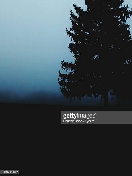 silhouette tree on field against sky in foggy weather - corinne paradis ストックフォトと画像