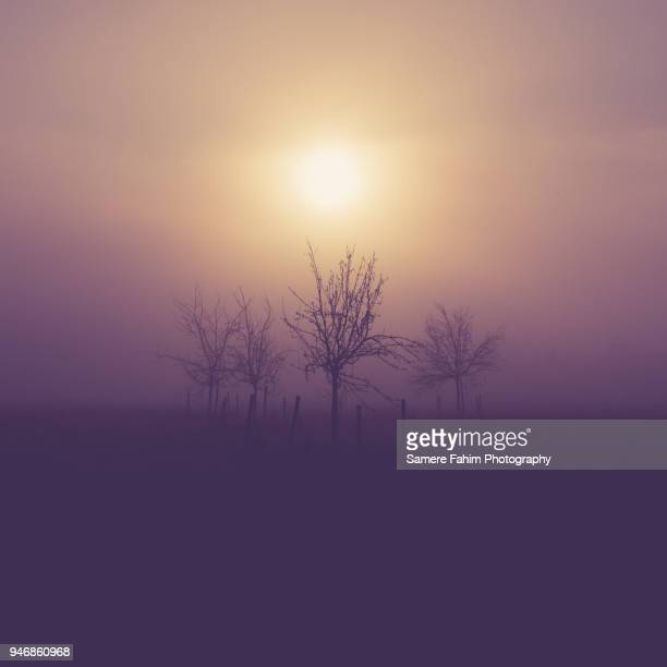 silhouette tree on field in foggy weather - samere fahim stock photos and pictures